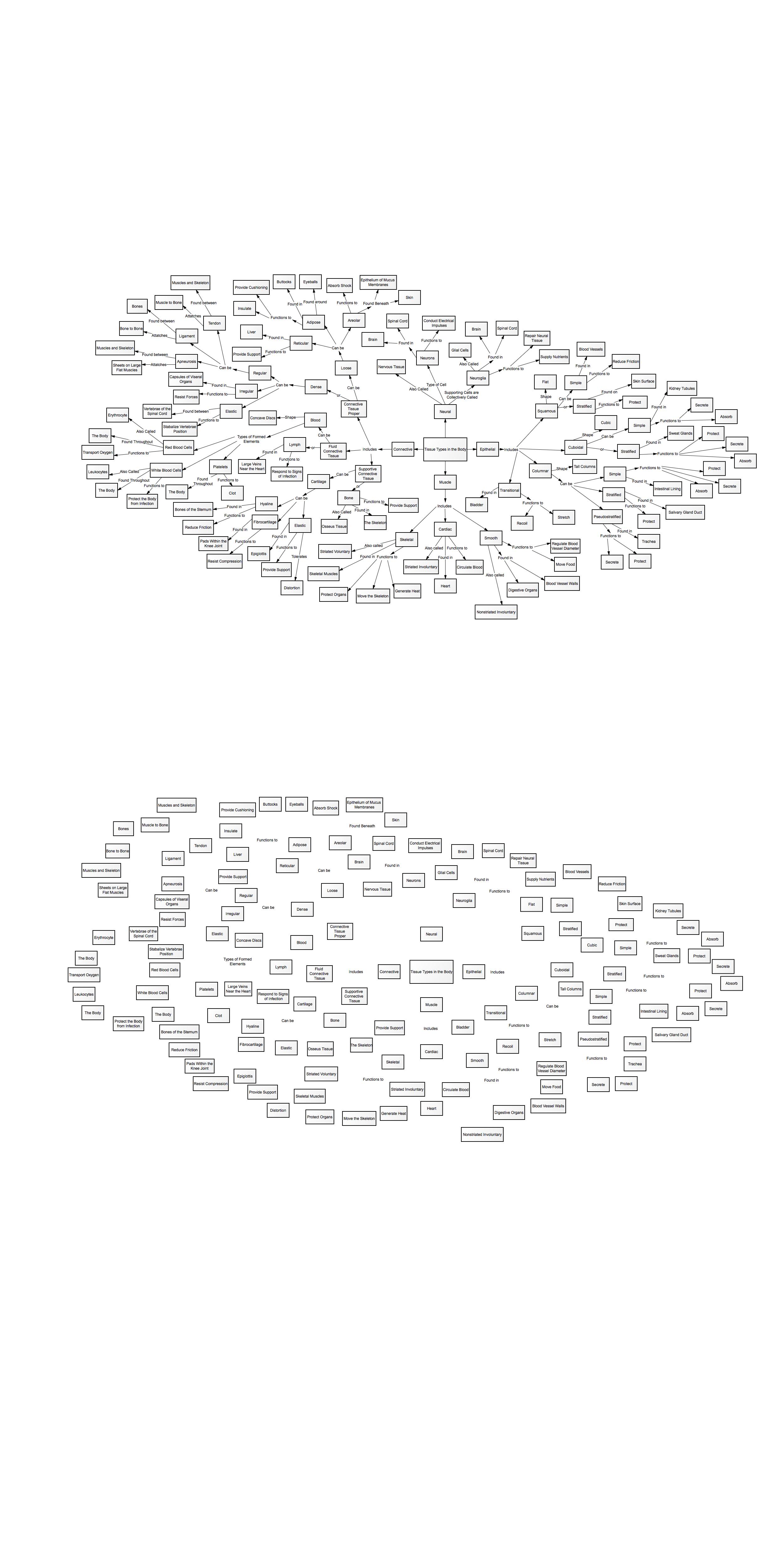 Anatomy Concept Map